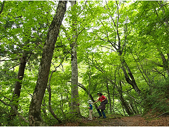 Hiking the Beech Forest